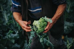 We work hard to ensure that the fruit and vegetables we sell are fresh, high in quality and local whenever possible. If we don't grow them ourselves, we buy from carefully chosen suppliers so that we can offer our customers the best.