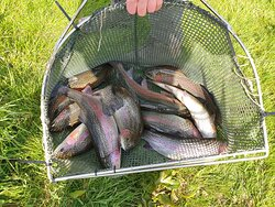 Regular stocking of high quality fish reared on site ensure optimum fishing for you to enjoy