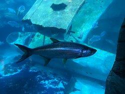 Fish in the main tank