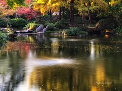A beautiful Fall day at the Japanese Gardens in Ft. Worth, Texas.
