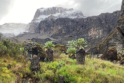 Manda Adventures we  offer free itinerary design & quote for your Kilimanjaro Climbing which can be customized as often as required.