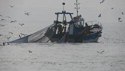 les pêcheurs au travail