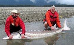 "99"" White Sturgeon from Fraser River with SturgeonHunter"