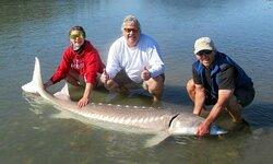 "97"" White Sturgeon from Fraser River with SturgeonHunter"