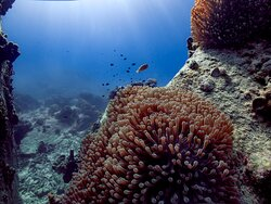 amazing anemone