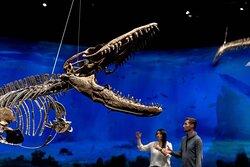 Originální kostry dinosaurů