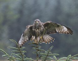Only a very few of the wonderful pictures I took with Mull Wildlife Breaks last week