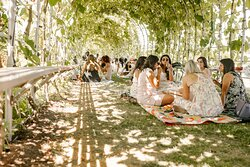 Picnic events in our grapevine tunnel.