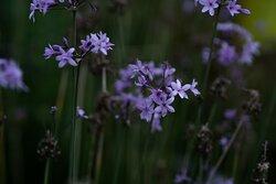 Flores comestibles de nuestros jardines