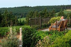 Morning coffee overlooking vineyards in August