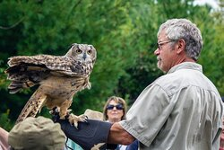 Meet Aisling our Eurasian Eagle Owl, one of the largest owl breeds in the world.