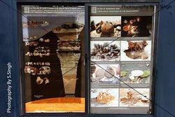 Fossils Presentation inside the Fossil Museum , Dino Adventure Park and fossils museum , Dhar-Mandav Rd, Mandu , M.P., India