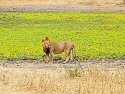 Tarangire/Ngorongoro/Lac Manyara