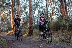 A couple riding on a river trail in Moama, near the Murray River.  One rider is on a NORCO e-mountain bike and the other ride on an Merida e-bike