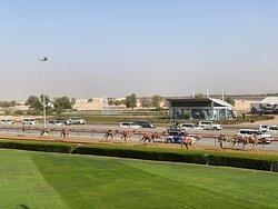 Royal Camel Racing.
