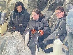 SeaWorld Penguin Antarctic Adventure Marina Mirage Sunset