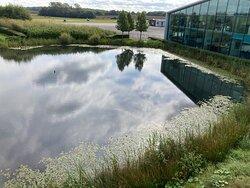 Lovely little pond