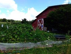 The hummingbird, bee and butterfly garden at the main barn at Barakah Heritage Farm.