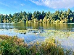 🦢 🦢🦢 on the Loch.