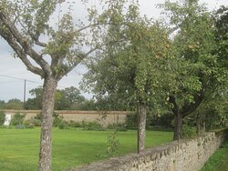 Château du Breuil Yvain. Vue 86. Poiriers dans Les Jardins, devant La Route de L'Entrée Principale. 18 Septembre 2021. Orsennes.