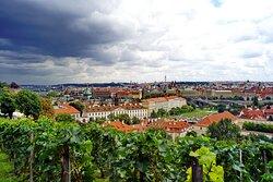 Svatovaclavska vinice