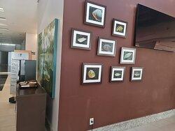 Quality Hotel Manaus 2