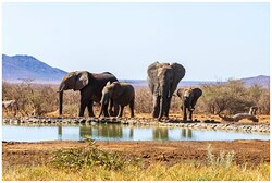 Welcoming party at lodge waterhole