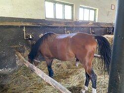 At Radauti ... the horses.