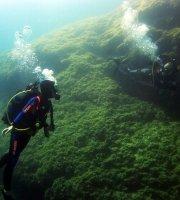 Dykking og snorkling
