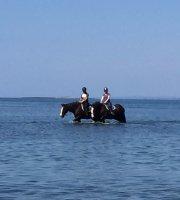 Visitas guiadas a caballo