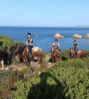 جولات ركوب الخيول