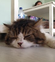 Cat Cafe Ubud