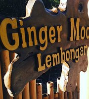 Ginger Moon Taco & Pizzeria