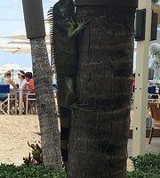 Tortuga Beach Grill & Bar