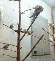 Bird Watching Cafe Poko No Mori