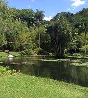 Rosa Jardim Botanico