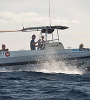 The Top Maui Dolphin Whale Watching Activities TripAdvisor - 12 extreme ocean adventures