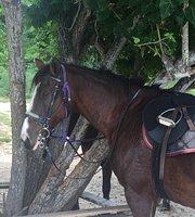 Tory wyścigów konnych