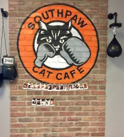 Southpaw Cat Cafe