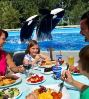 Shamu Rocks Dinner Buffet