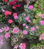 Orust Blommor AB