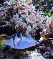 Aquashop Suss- U Salzwasseraquaristik