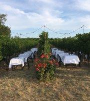 Podere Riosto - Cantina e Agriturismo