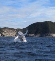 观海豚与观鲸