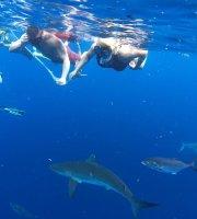 Köpek Balığı Dalışı