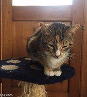 La casa de la gata Horacia