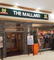 Mallard, Hungry Horse