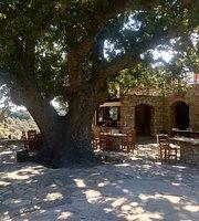 Taverna Cafe Kalliope