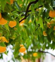 Il Mandarino
