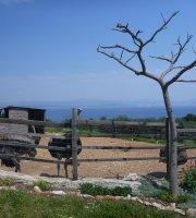 Iko's farm